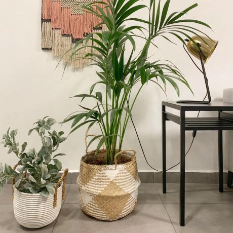 איך לשלב צמחים בעיצוב הבית?